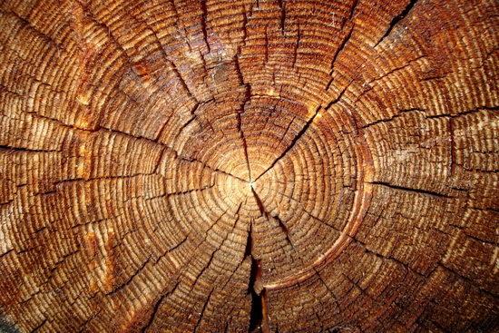 Как узнать вес древесины